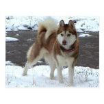 Perro esquimal de la nieve postal