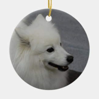 Perro esquimal ornato