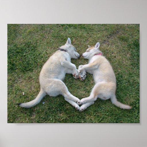 perro esquimal del corazón póster