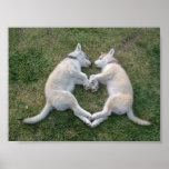 perro esquimal del corazón posters