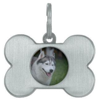 Perro esquimal dulce placas de mascota