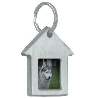 Perro esquimal dulce placa mascota