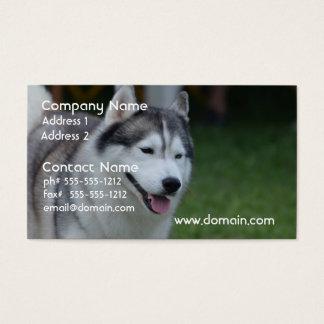 Perro esquimal dulce tarjetas de visita