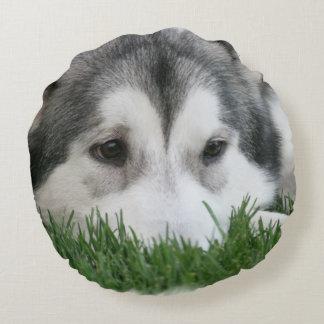 Perro esquimal durmiente cojín redondo