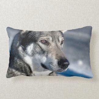 Perro esquimal en almohada de la nieve