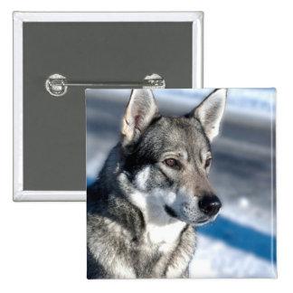Perro esquimal en botón de la nieve