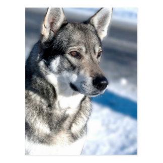 Perro esquimal en postal de la nieve