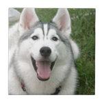 Perro esquimal feliz azulejo