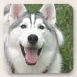 Perro esquimal feliz posavaso