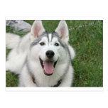 Perro esquimal feliz tarjeta postal
