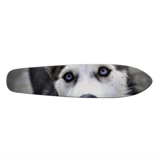 Perro esquimal lindo patin personalizado