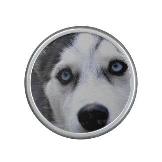 Perro esquimal observado azul altavoz