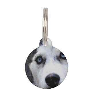 Perro esquimal observado azul placas de mascota