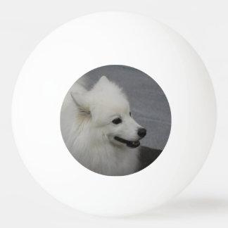 Perro esquimal pelota de tenis de mesa