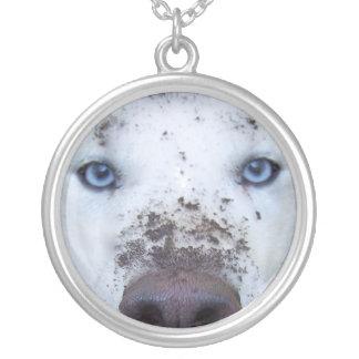 perro esquimal sucio collar plateado