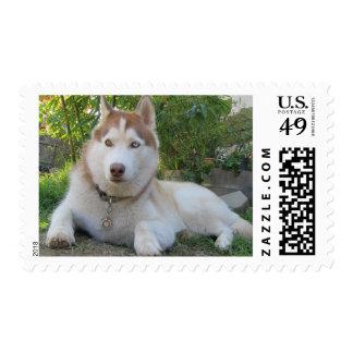 Perro esquimal y el bambú sellos postales