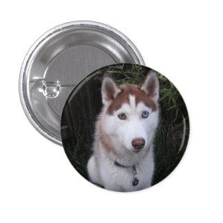 perro esquimal y las colas del caballo pin redondo de 1 pulgada