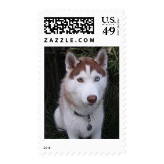 perro esquimal y las colas del caballo sello postal