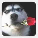 Perro esquimal y tarjeta del día de San Pegatinas Cuadradas