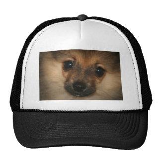 Perro fantasma gorras de camionero
