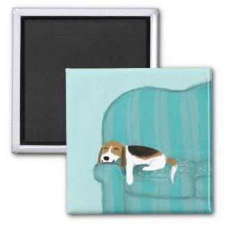Perro feliz del sofá - beagle lindo imán cuadrado