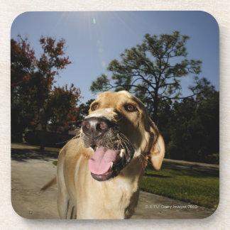 Perro feliz que corre alrededor del ejercicio al posavasos