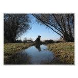 Perro fiel de la granja impresión fotográfica