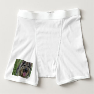 Perro finlandés de Lapphund Boxers