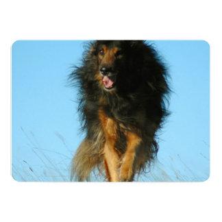 "Perro finlandés de Lapphund Invitación 5"" X 7"""