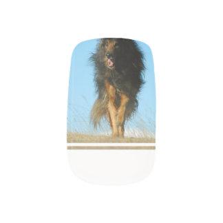 Perro finlandés de Lapphund Stickers Para Uñas