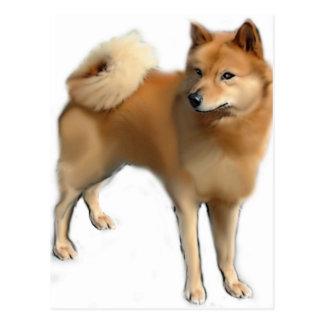 Perro finlandés del perro de Pomerania Postales