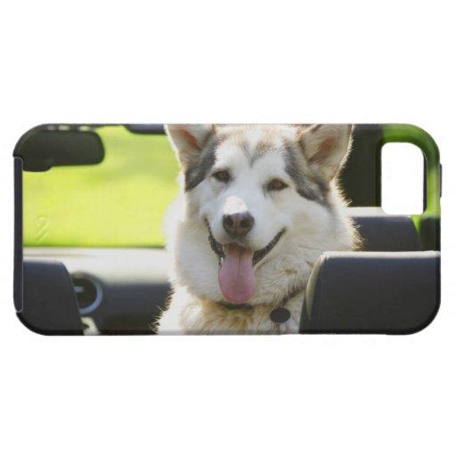 Perro fornido del convertible iPhone 5 carcasas