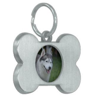 Perro fornido dulce placa de nombre de mascota