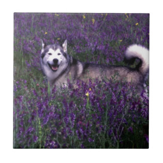 Perro fornido feliz azulejos cerámicos