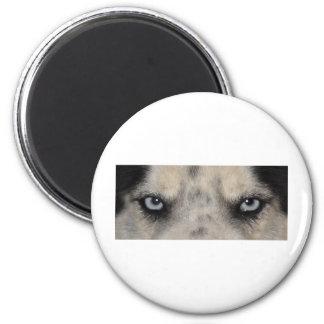 Perro fornido observado azul imán redondo 5 cm