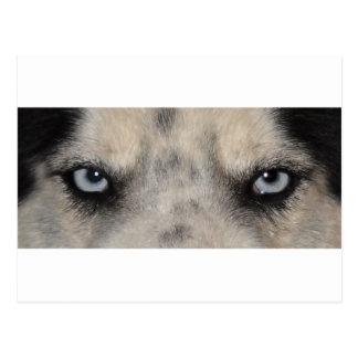 Perro fornido observado azul postal