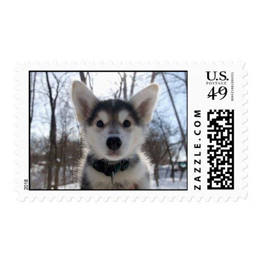 Perro fornido sellos