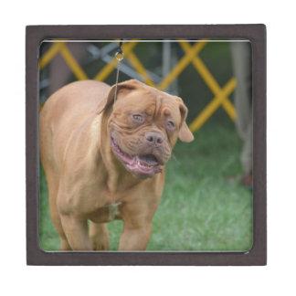 Perro francés del mastín caja de regalo de calidad