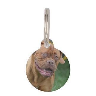 Perro francés del mastín placas para mascotas