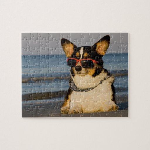 Perro fresco en la playa puzzles