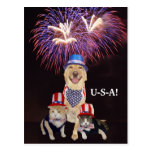 Perro/gato divertidos 4 de julio tarjetas postales