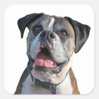 Perro grande del boxeador pegatina cuadrada