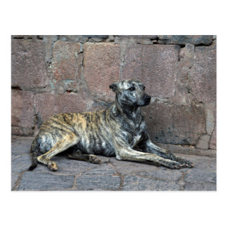 Perro Gris-Rayado en Cusco, Perú Postal
