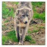 Perro gris tejas  cerámicas