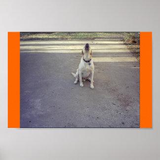 Perro guardián póster