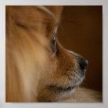 Perro guardián posters