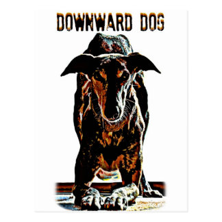 Perro hacia abajo tarjetas postales