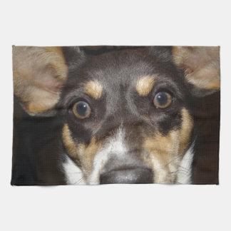 Perro hecho frente divertido toallas de cocina