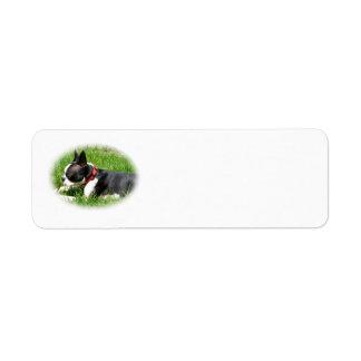 Perro hermoso de Boston Terrier en hierba con el Etiqueta De Remite