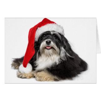 Perro hermoso de Havanese del navidad con el gorra Tarjeta De Felicitación